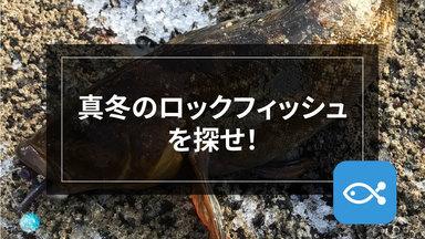 【ロックゲーム】大型アイナメは、冬こそチャンス!
