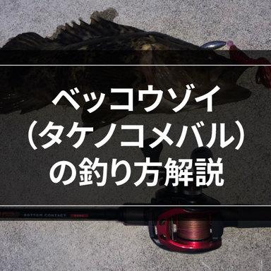【ロックゲーム】ベッコウゾイ(タケノコメバル)を釣ってみよう!