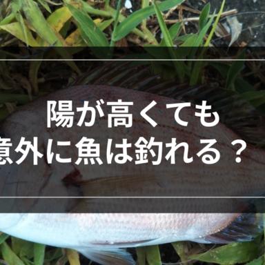 【ライトゲーム】陽が高くても意外に魚は釣れる?