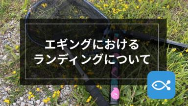【エギング】ランディングについて-ネット派?ギャフ派?-