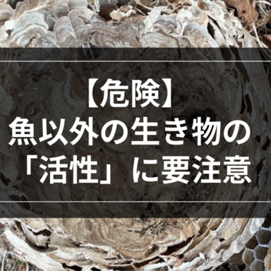 【ロックゲーム】危険!魚以外の生き物の「活性」に要注意