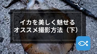 【エギング】イカを美しく魅せる撮影方法(下)