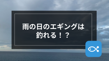 【エギング】雨の日のエギングは釣れる!?