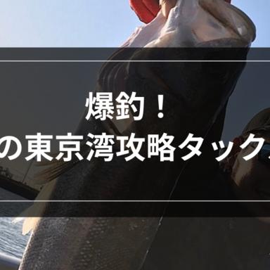 【シーバス】爆釣!秋の東京湾攻略タックル