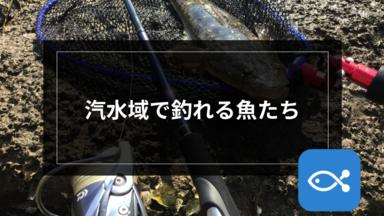 【チニング】汽水域で釣れる魚たち