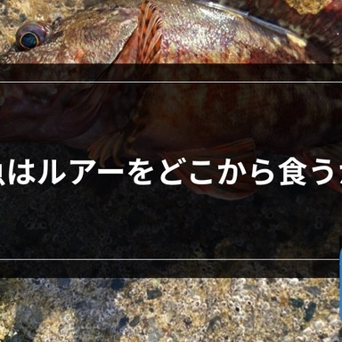 【ライトゲーム】魚はルアーをどこから食うか