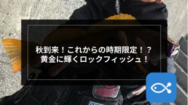 【ロックゲーム】秋到来!これからの時期限定!? 黄金に輝くロックフィッシュ!