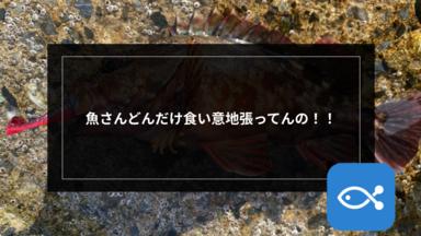 【ライトゲーム】魚さん,どんだけ食い意地張ってんの!!