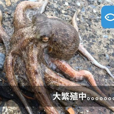 大繁殖している!?今年の東京湾は異常事態!