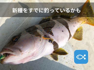 似ているようで違う魚達、すでに新種を釣っているかもしれない。
