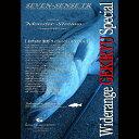 エムシーワークス STRANGE BLUE SBL 913S