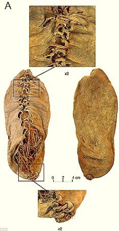 これが人類初!5500年前に作られた靴