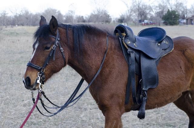馬の鞍のことです