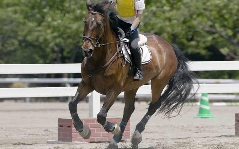 乗馬・屋外作業などによる足へのダメージを軽減