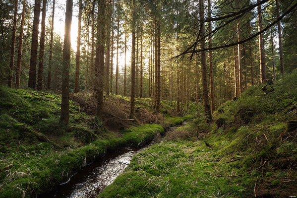 危険が潜む森の中で戦う為の靴