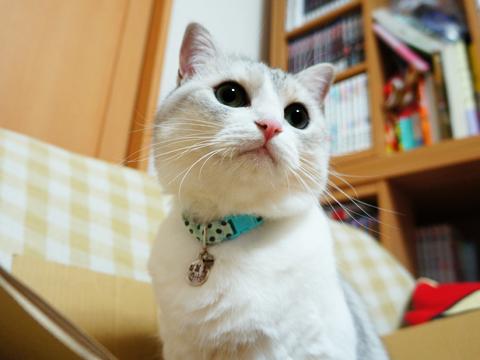 """猫がしっかり""""完成""""するのは・・・"""
