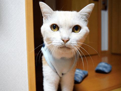 猫の体格あれこれ!