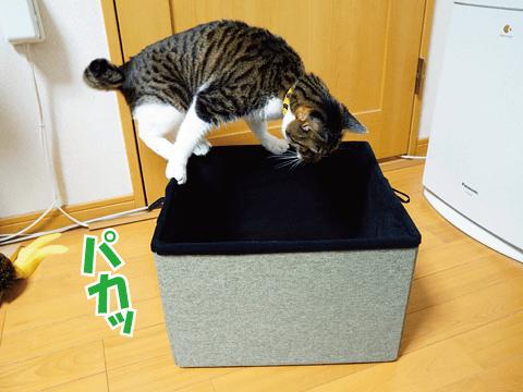 猫が乗っても大丈夫!
