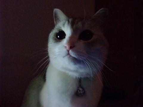 暗闇の猫!