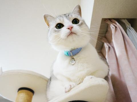 猫のおトイレ事情