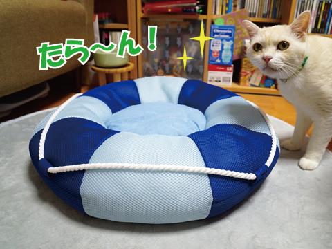 夏と浮き輪と猫ベッド♪