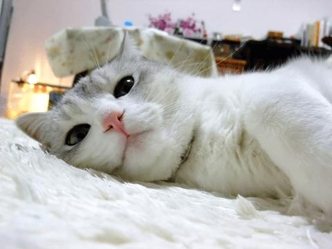 違いのわかる猫!