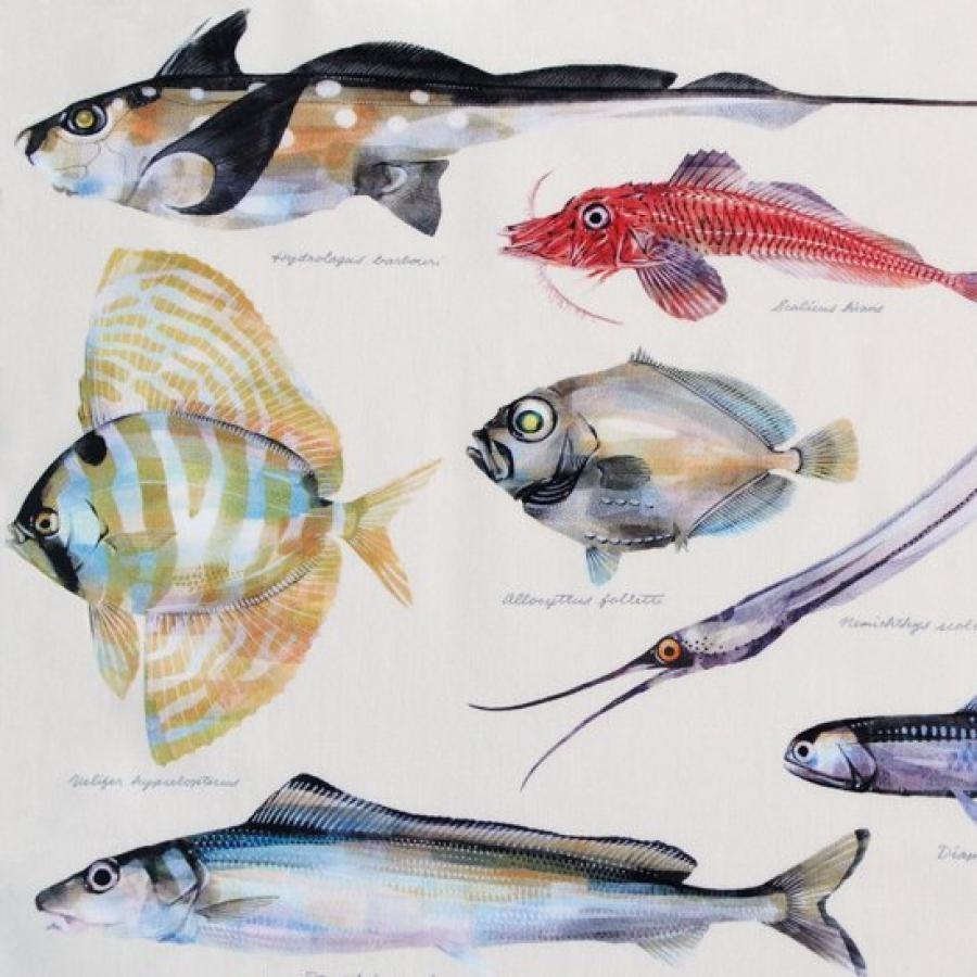 uonofu / 深海魚図譜