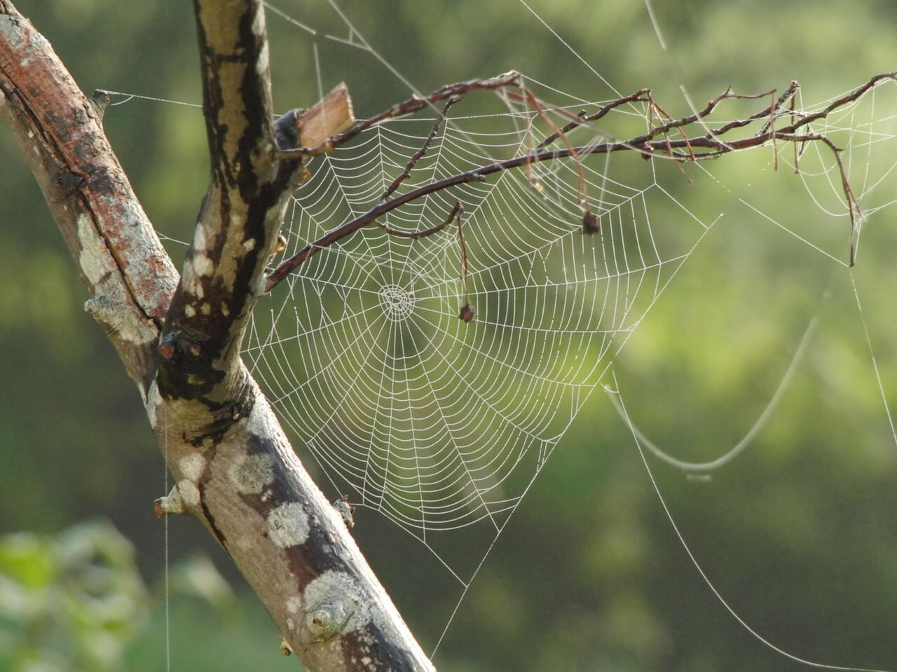 spider-web-tree-branches-pattern-39494