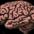 くも膜下出血の前兆は、体験したことがない強烈な頭痛です。すぐに病院へ!