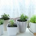 良いことだらけの観葉植物の効果☆ポイントは土壌があること!