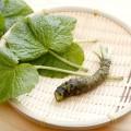 ただの薬味ではない!ワサビの美容効果はシミやそばかすを消してくれる!