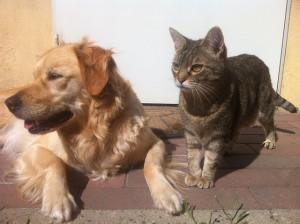 ペットから感染するペット由来感染症はどのくらいあるの?