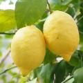 実践簡単!レモン水のダイエット効果は信じていいの?