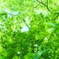 日本が発祥の地だって知ってた?こころと身体に効く森林セラピーとは