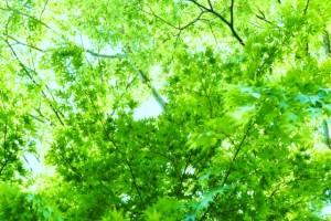 森林浴、実は日本発だって知ってた?