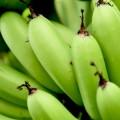 青バナナダイエットとは?色によって違うバナナの栄養と効果!