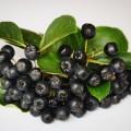奇跡と呼ばれるフルーツを使った、アロニアダイエットとは?