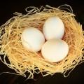 手軽だけど美容にもいい卵。 驚くべき卵の美容効果について