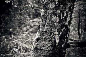 tree-1767144_640