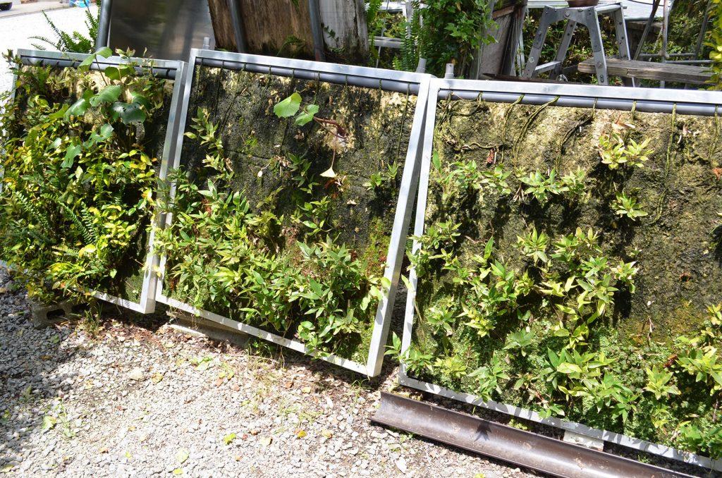 壁面緑化システム : パネル分離型で個別交換できる (1)