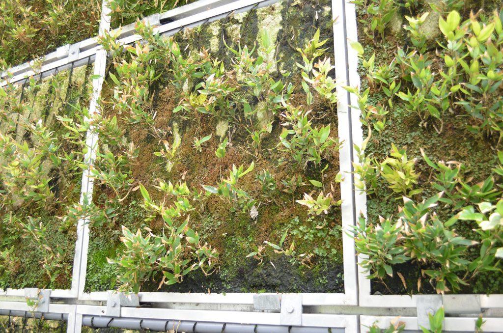 壁面緑化システム : パネル分離型で個別交換できる (3)