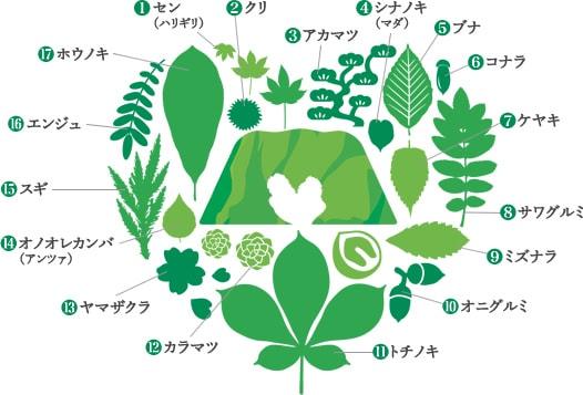 広葉樹17種類