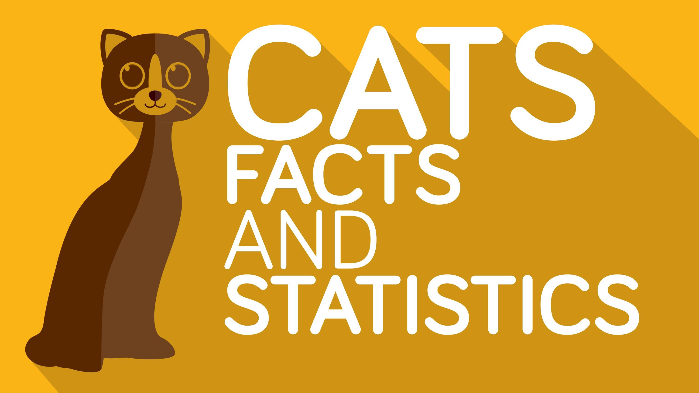 ニャンとも気になる!ネコに関する18の事実