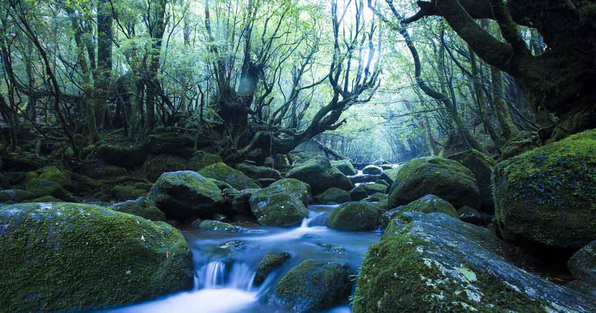 自然体験として、世界自然遺産を訪れてみよう。