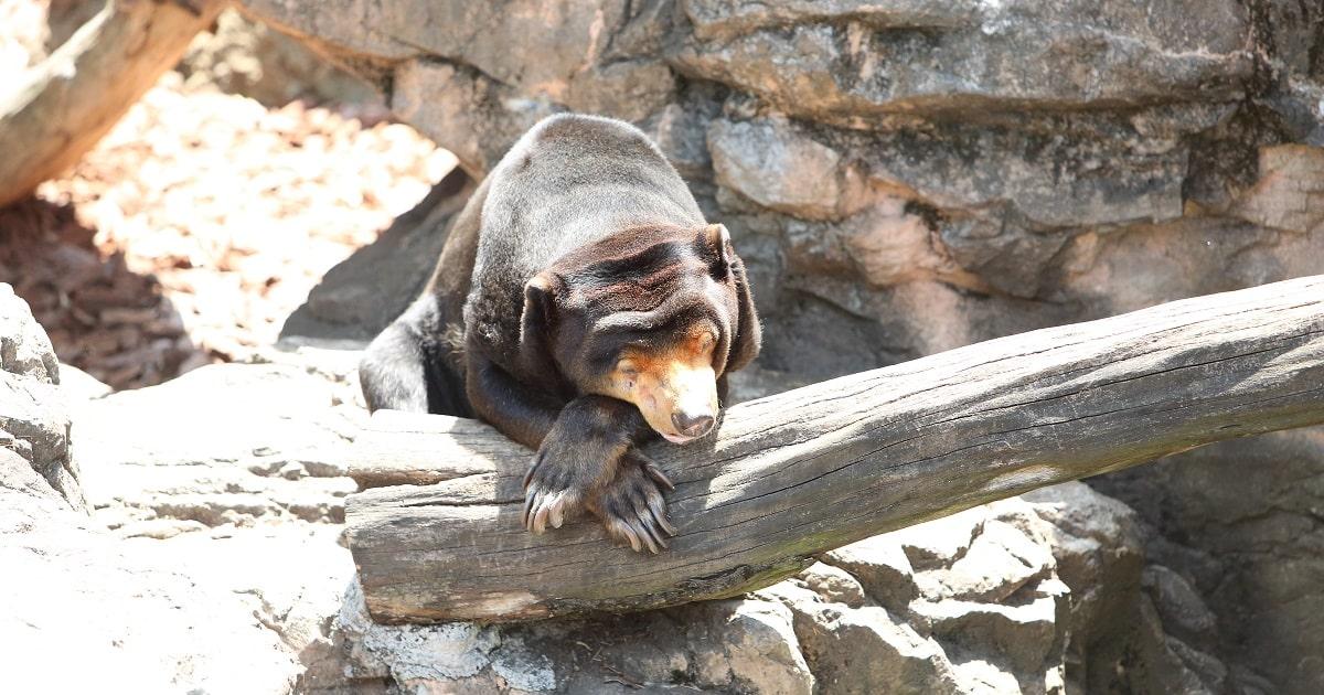 """上野動物園おすすめの""""調べ学習""""のテーマとポイント5"""