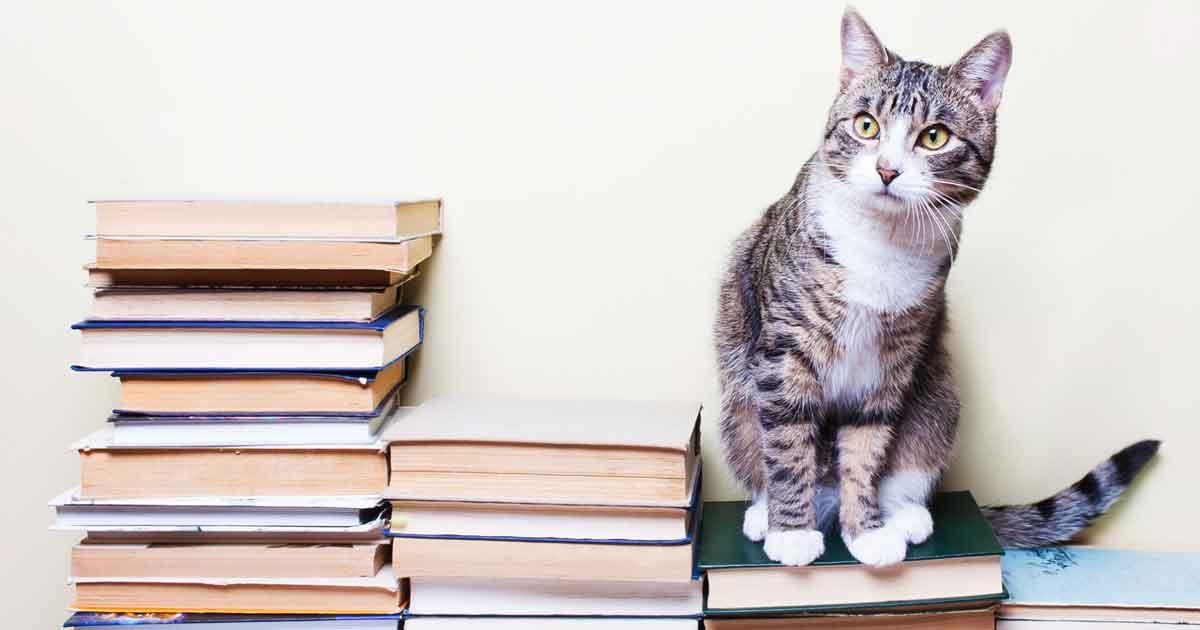 小学生向けおすすめ国語辞典を3つ厳選! 定番の三省堂や人気ランキング上位の辞典を紹介します