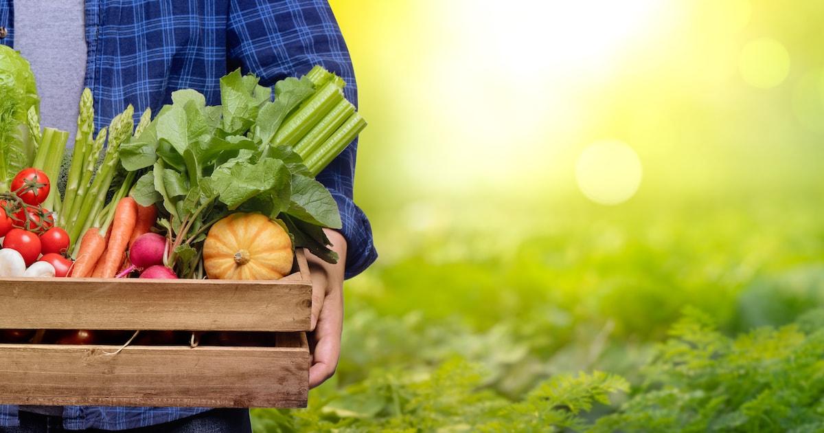 農薬・遺伝子組み換え食品の危険性02