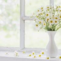 リビングに花を飾っていますか? 「花育」で好奇心と創造力が育まれる理由