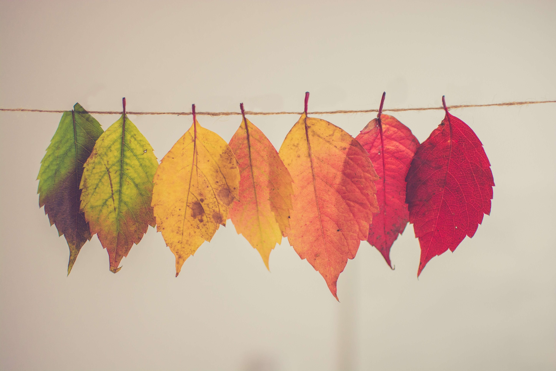 秋冬 衣替え