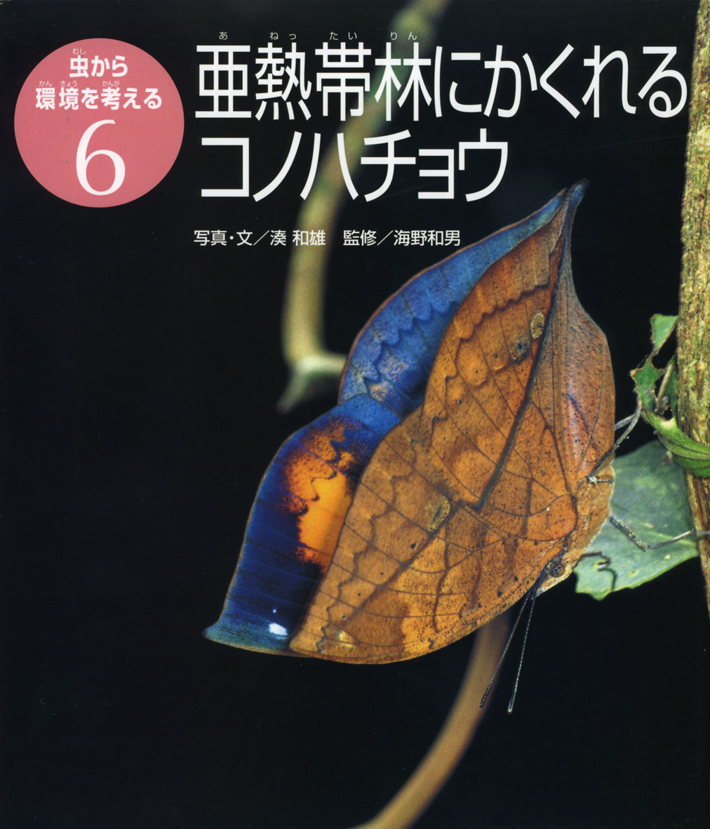 亜熱帯林にかくれるコノハチョウ